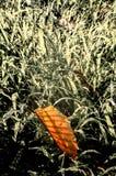 Feuille sèche tombée sur l'herbe, humeur de tristesse image stock