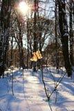Feuille sur la branche de l'arbre d'hiver image stock