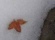 Feuille sur la neige de fonte Photos stock