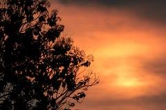 Feuille sur la silhouette d'arbre Image stock