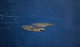 Feuille sur le fond bleu avec l'éraflure de film Photo libre de droits