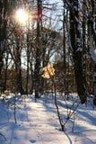 Feuille sur une branche d'arbre d'hiver photos stock