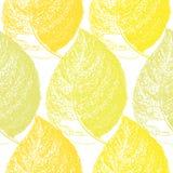Feuille tirée par la main d'automne Fond sans couture de modèle de papier peint Photographie stock