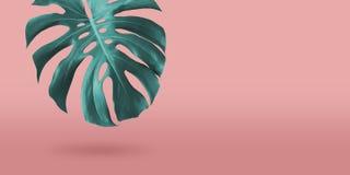 Feuille tropicale de monstera l'été minimal de fond de corail de couleur photos libres de droits