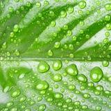 Feuille verte avec des baisses Image stock