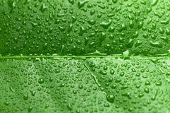 Feuille verte avec des baisses de l'eau au-dessus de elle image libre de droits