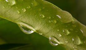 Feuille verte avec des gouttelettes de pluie là-dessus Photos stock