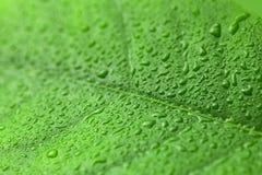 Feuille verte avec des gouttes de l'eau au-dessus de elle photographie stock
