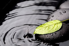 Feuille verte avec des pierres de zen sur le fond humide Images stock