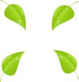 Feuille verte avec l'espace pour le texte Vecteur EPS10 Photos libres de droits