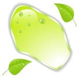 Feuille verte avec l'espace pour le texte Vecteur EPS10 Photographie stock libre de droits