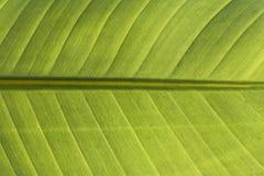 Feuille verte comme fond Photo libre de droits