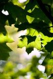 Feuille verte d'abstraction Photos libres de droits