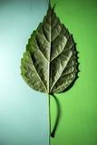 Feuille verte d'une usine dans différentes nuances images stock