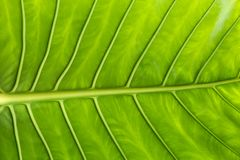 feuille verte dans la fin  Images stock