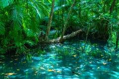 feuille verte dans un marais complet photos stock