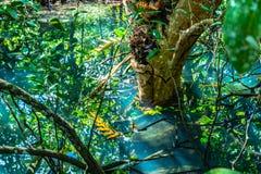 feuille verte dans un marais complet images stock