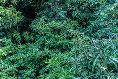 feuille verte dans un marais complet photo libre de droits