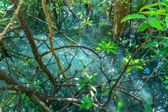 feuille verte dans un marais complet photos libres de droits
