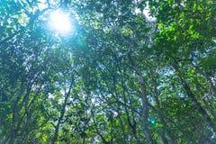 feuille verte dans un marais complet images libres de droits