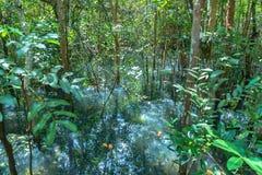 feuille verte dans un marais complet photographie stock