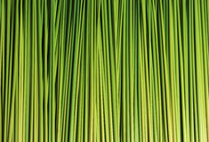 Feuille verte de carex Images stock