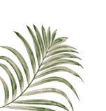 Feuille verte de fond de palmier Photographie stock libre de droits