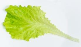 Feuille verte de laitue du plat blanc photographie stock