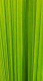 Feuille verte de nature pour le fond Photographie stock libre de droits