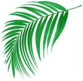 Feuille verte de palmier Image stock