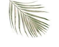 Feuille verte de palmier sur le fond blanc Image libre de droits