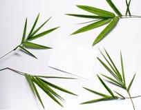 Feuille verte en bambou et carte postale vide Vue supérieure de feuille en bambou sur le fond blanc Image stock