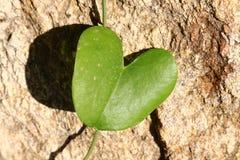 Feuille verte en forme de coeur contre la roche jaune image stock
