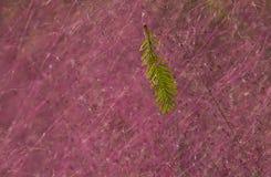Feuille verte et lovegrass pourpres Image libre de droits