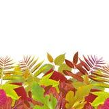 Feuille verte et rouge Photo stock