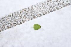 Feuille verte près d'une voie de pneu une chute fraîche de neige image libre de droits