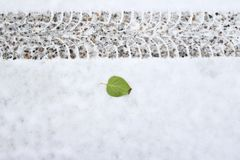 Feuille verte près d'une voie de pneu sur une neige fraîche image stock