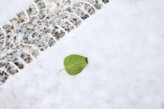 Feuille verte près d'une voie de pneu sur une neige fraîche photos stock