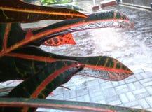Feuille verte sous la pluie Photographie stock