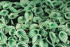 Feuille verte sur des milieux de nature Photo stock