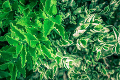 Feuille verte sur des milieux de nature Photos stock
