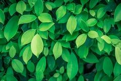 Feuille verte sur des milieux de nature Image stock