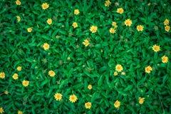 Feuille verte sur des milieux de nature Images stock