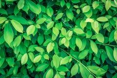 Feuille verte sur des milieux de nature Image libre de droits