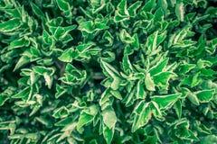 Feuille verte sur des milieux de nature Photo libre de droits