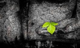 Feuille verte sur la main de la statue anciant de Bouddha image stock