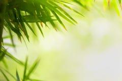 Feuille verte sur le fond brouillé de verdure Belle texture de feuille en nature Fond naturel photos libres de droits