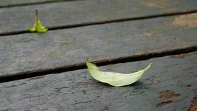 Feuille verte sur les vieilles planches en bois Photo libre de droits