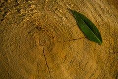 Feuille verte sur un tronçon d'arbre photo libre de droits