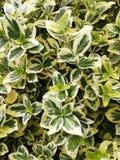 Feuille verte, texture Fond vert Fin vers le haut Beau de la conception fordifferent de feuilles tropicales vertes photographie stock